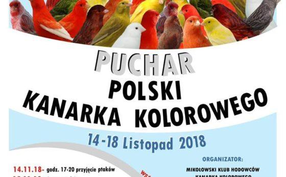 Puchar Polski Kanarka Kolorowego – wystawa ptaków